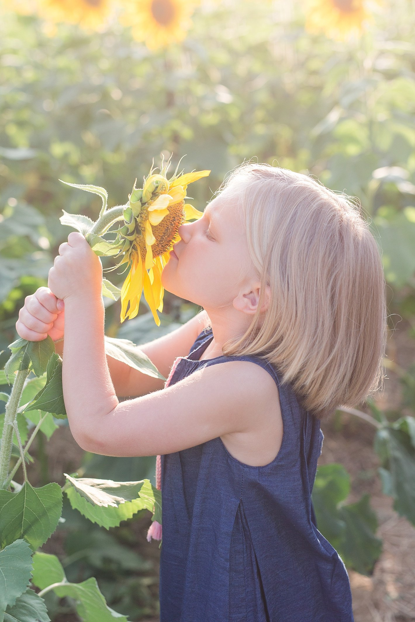 sunflowerfieldpicturesclearmeadowfarmportraitssunflowerfieldfamilyphotos-10