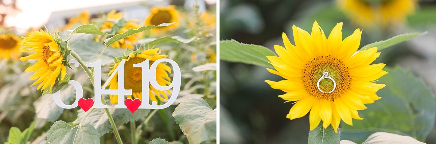 Sunflower Field engagement, Baltimore county sunflower field, pictures in sunflower fields, save the date, ring photo